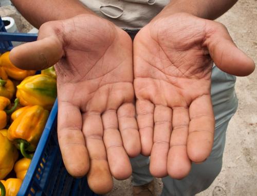 manos-1